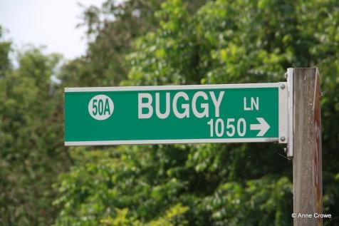 Buggy Lane