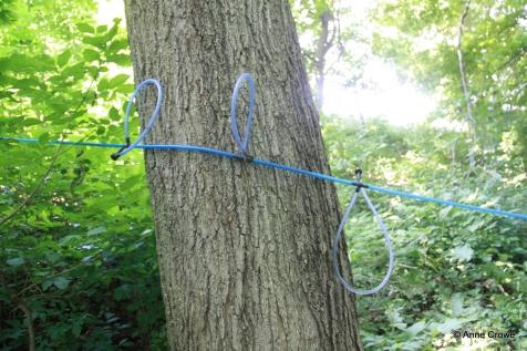 Maple Lines