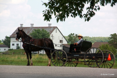 Mennonite Buggy-001