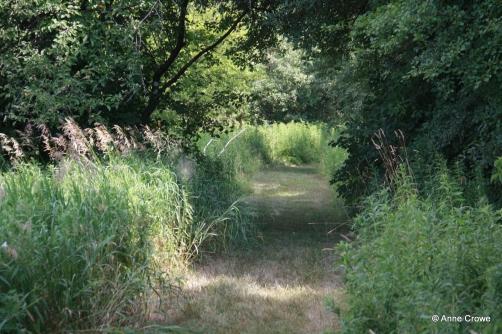 Mowed Trail