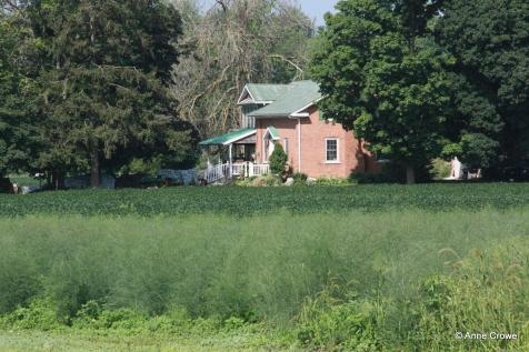 Asparagus Farm